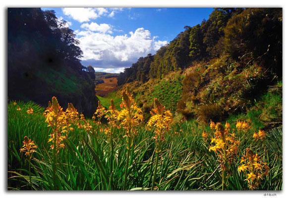 NZ0522.Kahurangi N.P.Sphinx Valley