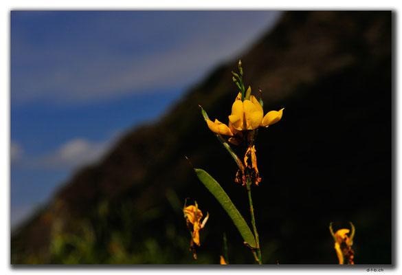 GE109.Mtskheta.Blumen