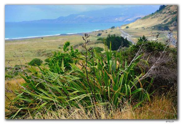 NZ0689.Wharanui