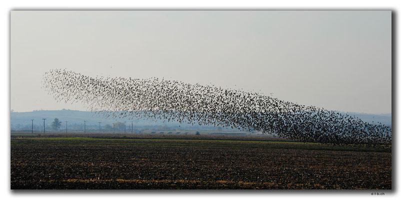 GR0126.Vogelflug