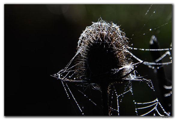 RO0037.Spinnennetz