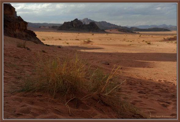 JO008.Strauch.Wadi Rum