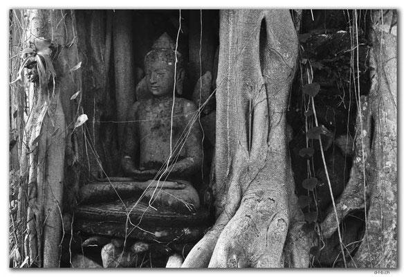 ID0141.Ubud.ARMA.Überwachsene Statue