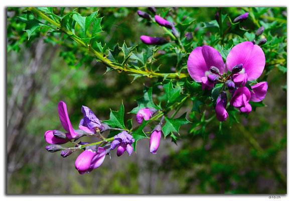 AU0780.Deep River.Blume