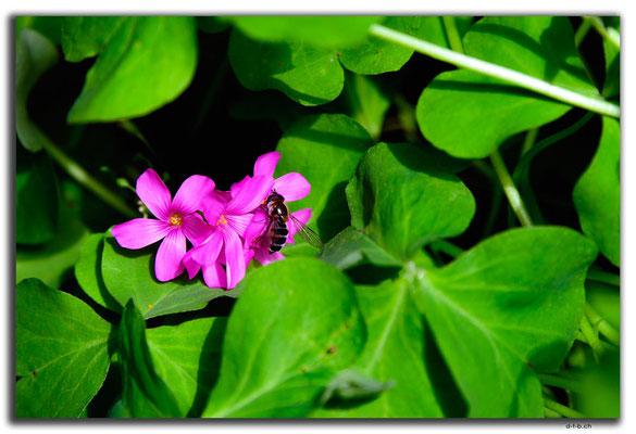 KR0219.Busan.Blume