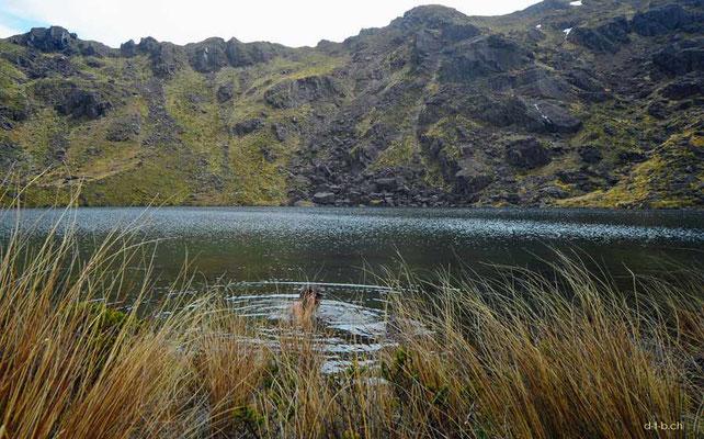 Neuseeland.Kahurangi N.P. Iron Lake