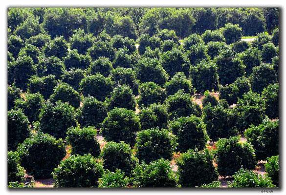 TR0280.Limyra.Plantage