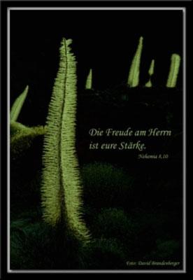 S0030 Teide Bugloss,Teneriffa.Nehemia 8.10