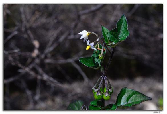 AU0612.Nilgen N.R.Blume
