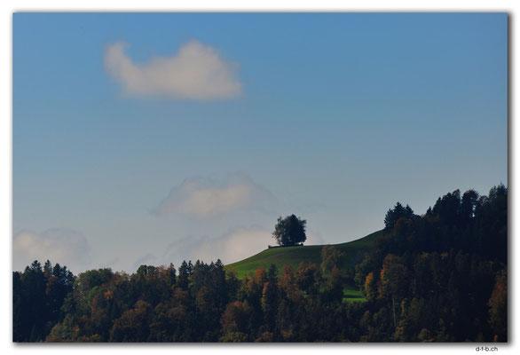 CH1030.Wald.ZH