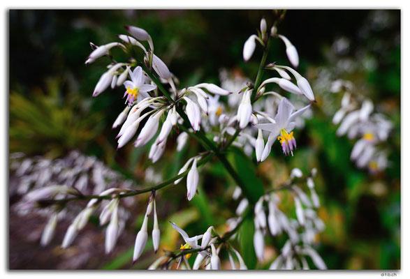 NZ0276.Hamilton.Blume