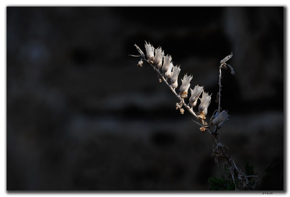TR0499.Girne.Schloss.Blume