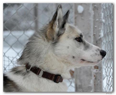 SE0116.Husky,Vamos