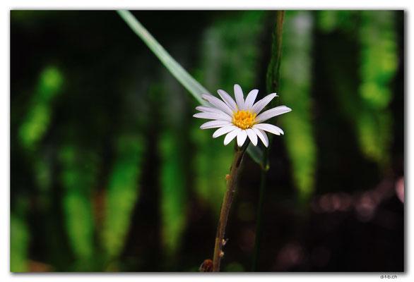 NZ0599.Milnthorpe Park.Flower