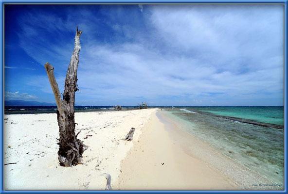 JM123.Lime Cay