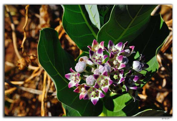 AU00157.Baumblüte