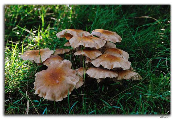 AU1483.Cann River Rainforest Walk.Pilze