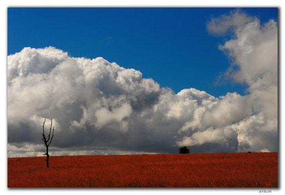 AU0620.Landschaft in Westaustralien und Wolken