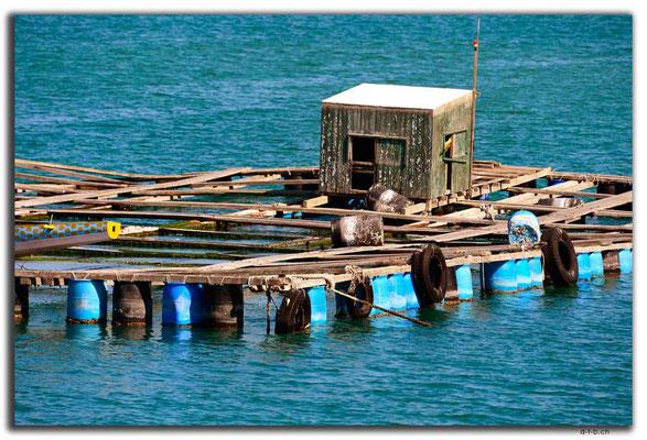 HK0088.Lamma Island.Fischereibetrieb