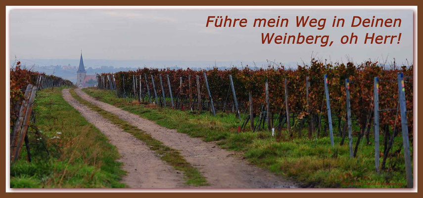 S0167.Weinberg.Freinsheim.DE