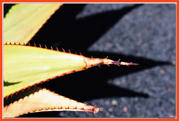 LAN023 Jardin de Cactus