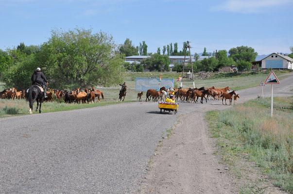 KZ: Solatrike vor einer Pferdeherde (Foto: Tobias)
