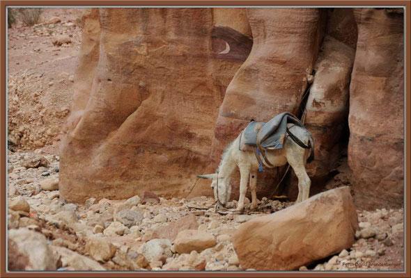 JO022.Esel.Petra