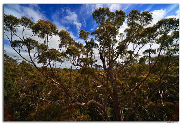 AU0791.Tree Top Walk