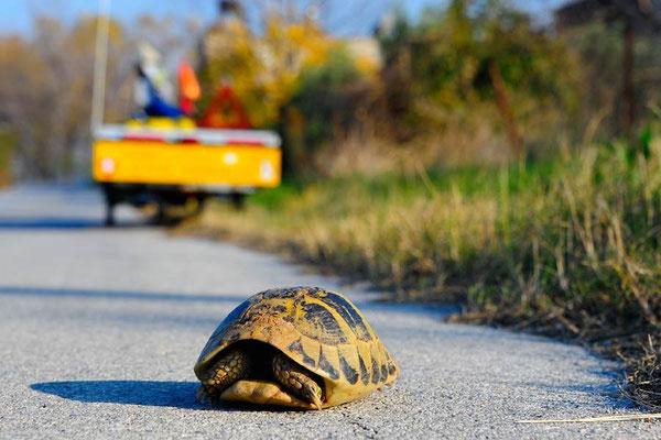 GR: Solatrike trifft Schildkröte