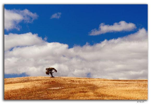 AU1033.Coffin Bay.Lone Tree Hill