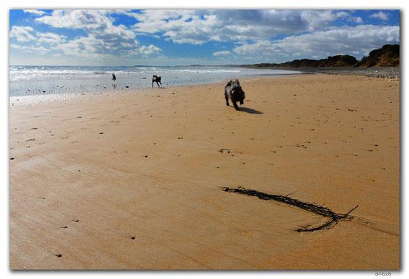 AU1265.Devonport.Moorland Beach