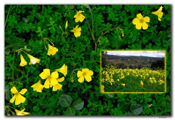GR0518.Blumen am Pass