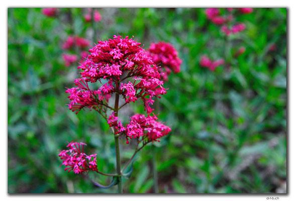 AU0765.Quinninup.Blume