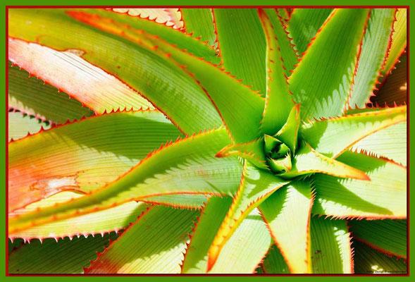 LAN029 Jardin de Cactus