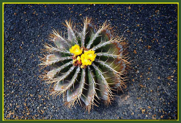 LAN031 Jardin de Cactus