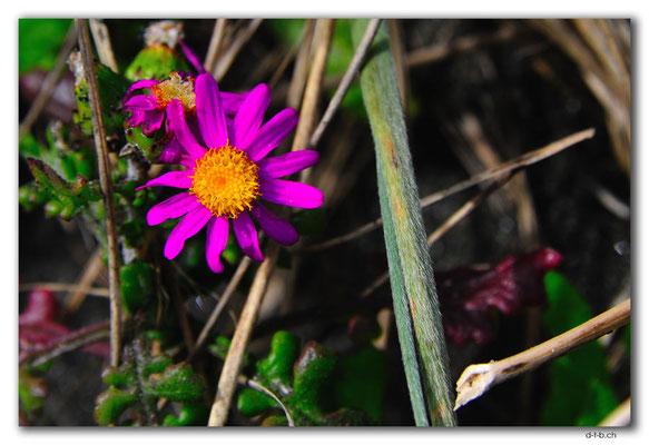 NZ0411.Waiinu Beach.Blume