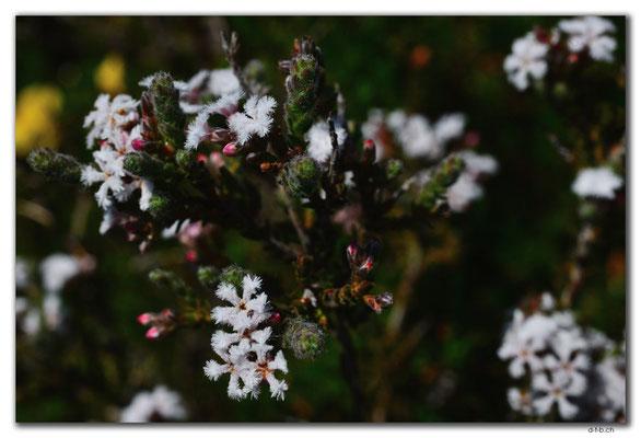 AU0615.Nilgen N.R.Blume