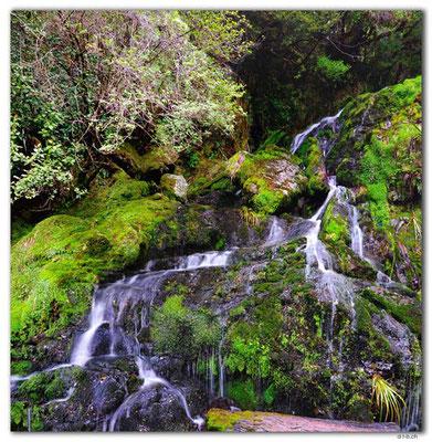 NZ0529.Kahurangi N.P.Growler Creek Falls