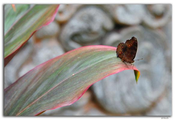 ID0012.Denpasar.Bali Museum.Schmetterling