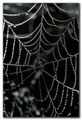 RO0098.Hoghiz.Spinnennetz