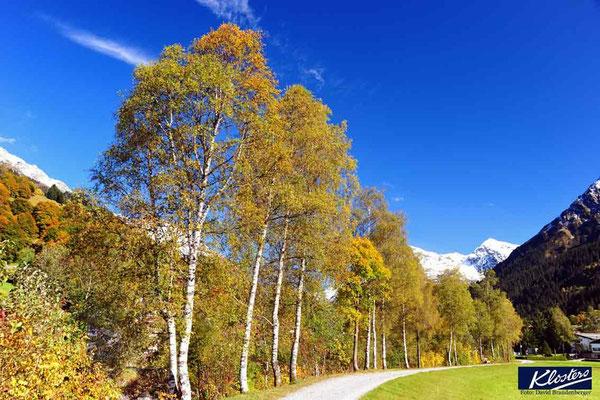 P0073.Birken.Klosters.CH