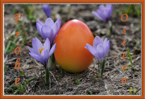 T014.Frohe Ostern