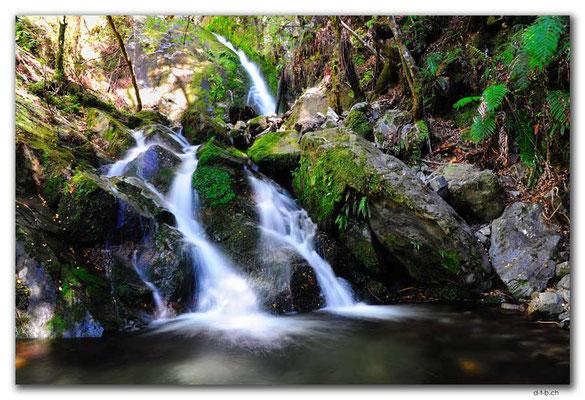 NZ0547.Kahurangi N.P.Waterfall beside the track