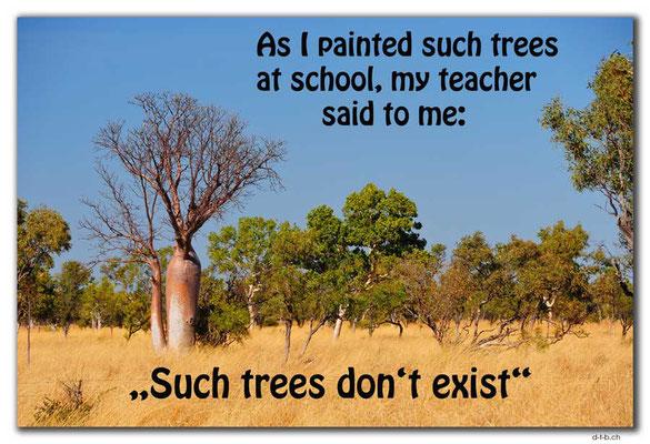 T046.Boab-Tree.AU.