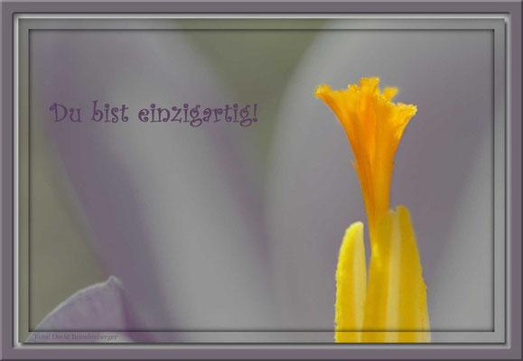 S0003,Krokus,Klosters,CH. Text: d-t-b