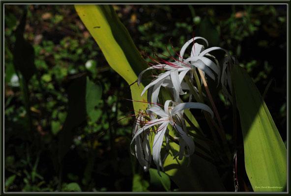 JM071.RPR Blume