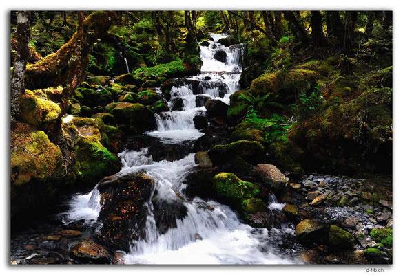 NZ0647.Nelson Lakes N.P.Hopeless Creek