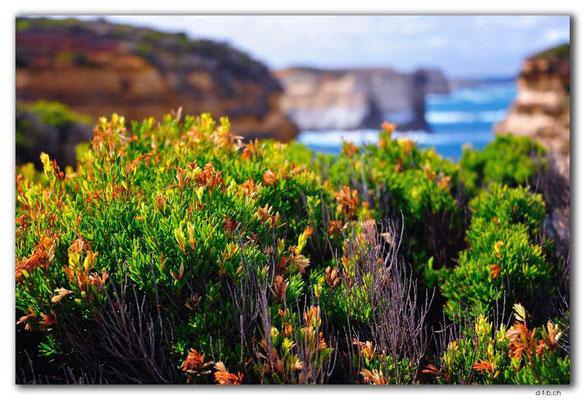 AU1172.Muttonbird Island Lookout
