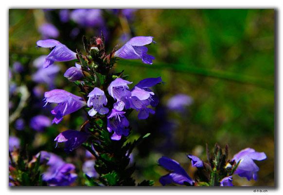 CN0318.Blume