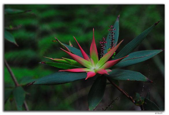 AU0792.Tassel Flower